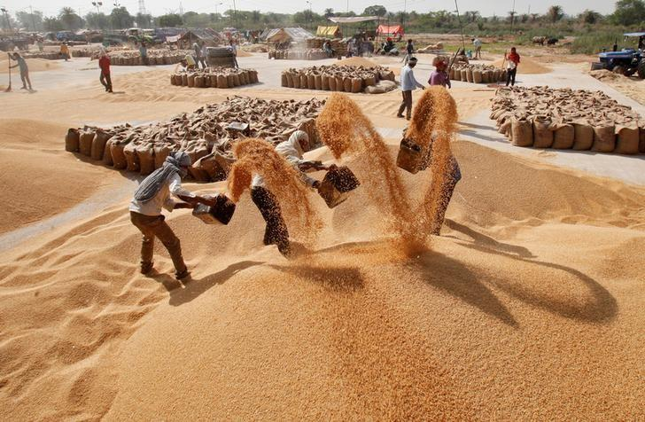 Workers remove dust from wheat at a wholesale grain market in Chandigarh, India April 17, 2017. REUTERS/Ajay Verma/Files