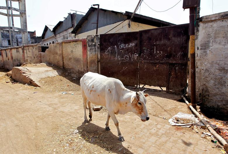 FILE PHOTO: A cow walks past a closed slaughter house in Allahabad, India March 28, 2017. REUTERS/Jitendra Prakash/File photo