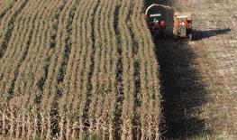 El maíz es cosechado en un cálido día de verano en Santo Antonio do Jardim, Brasil.  6 de febrero 2014.  Los productores brasileños de maíz podrían haber recogido cerca de 100 millones de toneladas del grano en el período de cosecha 2016/17, dijo el jueves durante un seminario André Pessôa, director de la consultora Agroconsult. REUTERS/Paulo Whitaker (BRAZIL - Tags: AGRICULTURE) - RTX18BOW