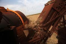 Una máquina cosechadora corta caña de azúcar en un campo en la propiedad del Grupo Moreno en Ribeirão Preto, región nororiental del estado de Sao Paulo, Brasil, 15 de septiembre de 2016. La región centrosur de Brasil produjo 1,754 millones de toneladas de azúcar en la segunda quincena de mayo, en comparación con las 2,106 millones de toneladas del periodo anterior de dos semanas, dijo el martes el grupo de la industria Unica.   REUTERS/Nacho Doce - RTSOMQA