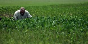 El ingeniero agrícola Luis Crosetti revisa cultivos de soja afectados por inundaciones cerca de Pergamino, en Argentina. 23 de junio de 2017. Los agricultores argentinos se están desprendiendo muy lentamente de sus granos de soja porque creen que los precios locales son muy bajos, y su estrategia, que se está replicando en Brasil, podría terminar impulsando los precios internacionales de la oleaginosa. REUTERS/Marcos Brindicci