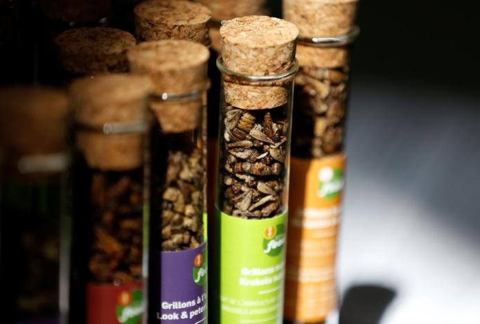 Containers holding crickets in various flavours are shown at a farm belonging to company 'Little Food,' which prepares and promotes food products made from crickets, in Brussels, Belgium June 9, 2017. Francois Lenoir