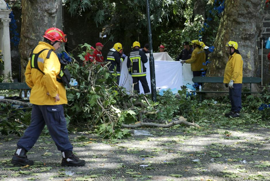 Image result for tree falls on worshippers in portugal