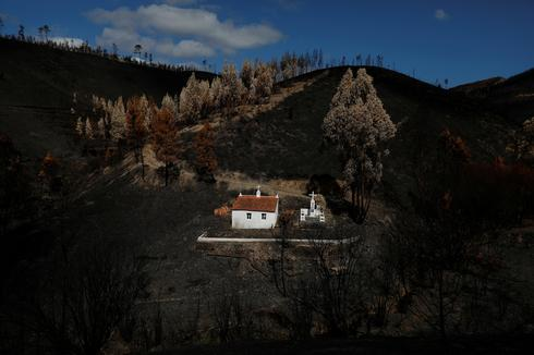 Scorched earth after Portugal's fires