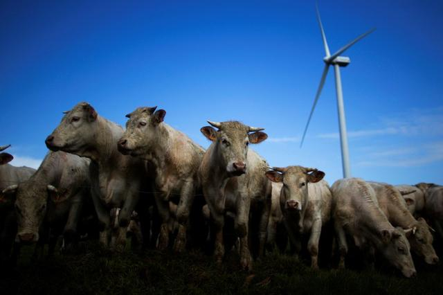 France plans to accelerate wind power projects - Reuters