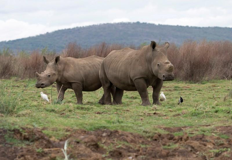 Want to buy some rhino horn? Log in here, DNA required - Reuters