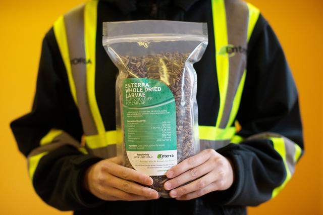 Insect farms gear up to feed soaring global protein demand
