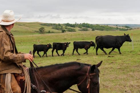 Upper Plains, Midwest livestock sector braces for wintry blast