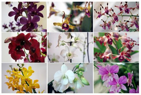 Singapore's 'orchid diplomacy'
