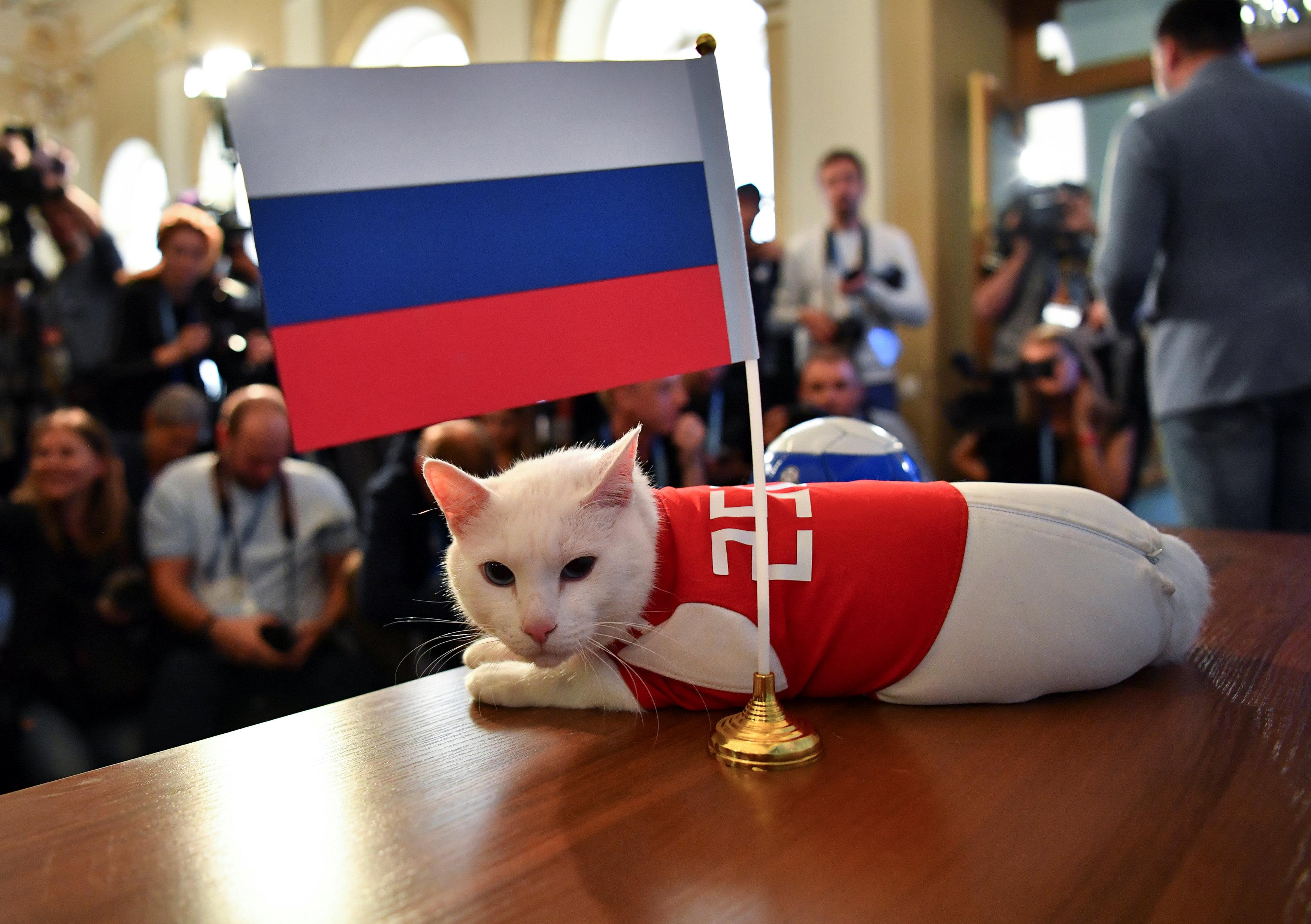 Image result for psychic cat world cup