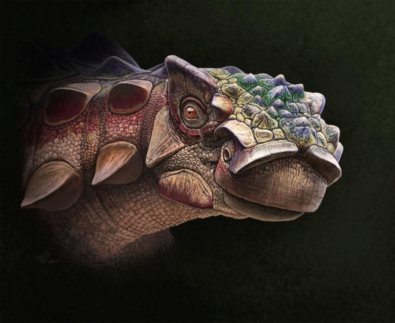 A life reconstruction of the head of the new armored dinosaur Akainacephalus johnsoni, which lived 76 million years ago in Utah, U.S. is seen in this image provided July 19, 2018.    Andrey Atuchin/Handout via
