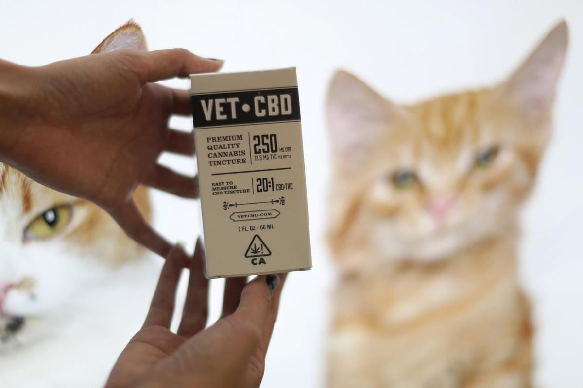 Pot for pets: U S  federal law puts vets into a quandary