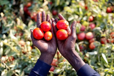 The plight of Italy's African laborers