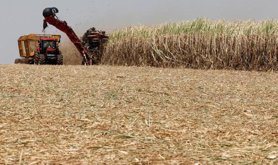 Brazil's sugar exports could drop to 22 million tonnes - industry