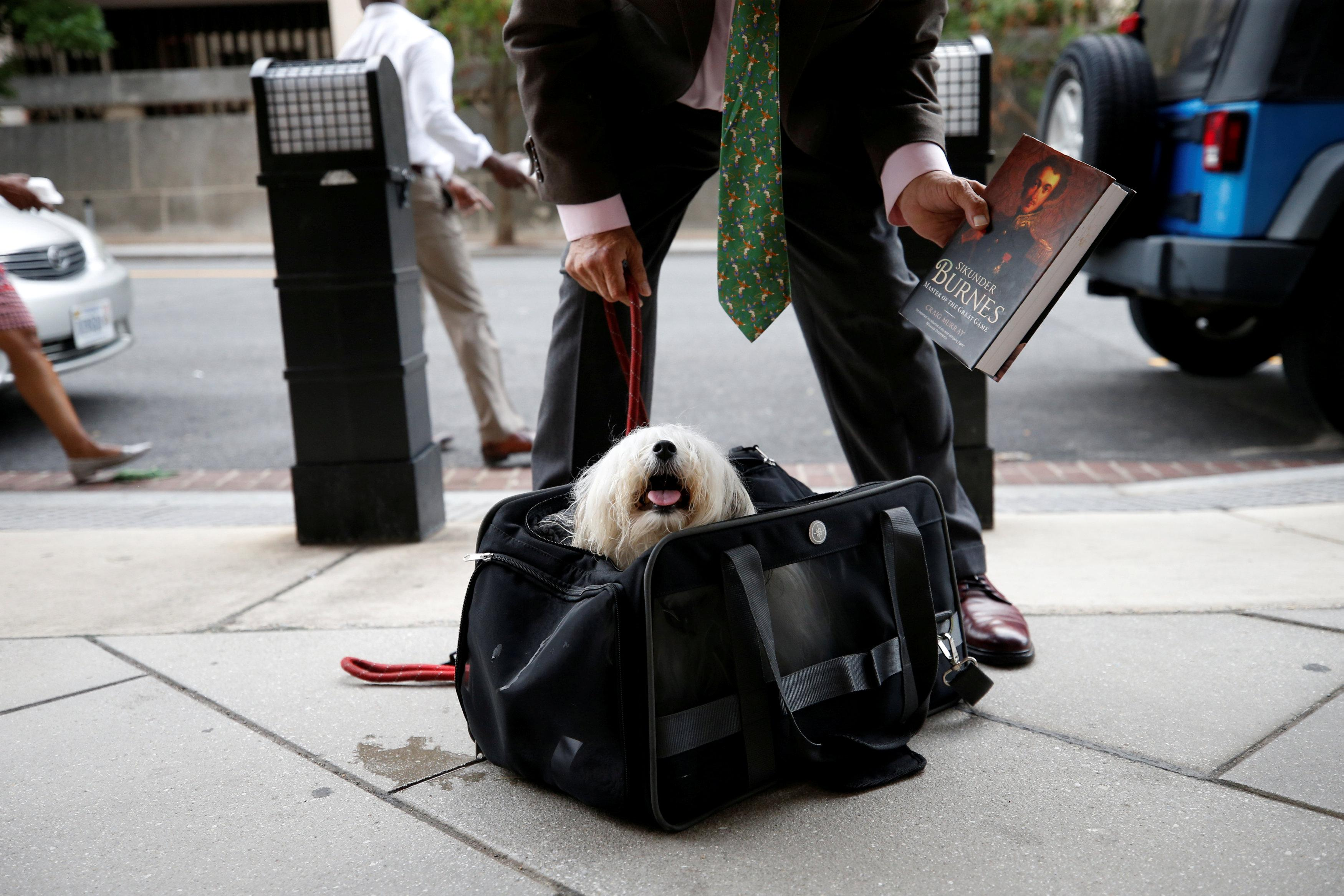 Randy Credico, an associate of former Trump campaign adviser Roger Stone, secures his pet dog as he arrives to testify before the grand jury convened by Special Counsel Robert Mueller at U.S. District in Washington, U.S., September 7, 2018. Chris Wattie