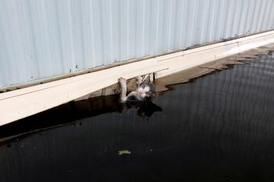 Saving pets after Hurricane Florence