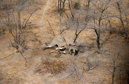 Dozens of dead elephants discovered in Botswana