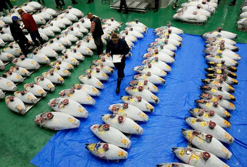World's largest fish market reopens in Tokyo