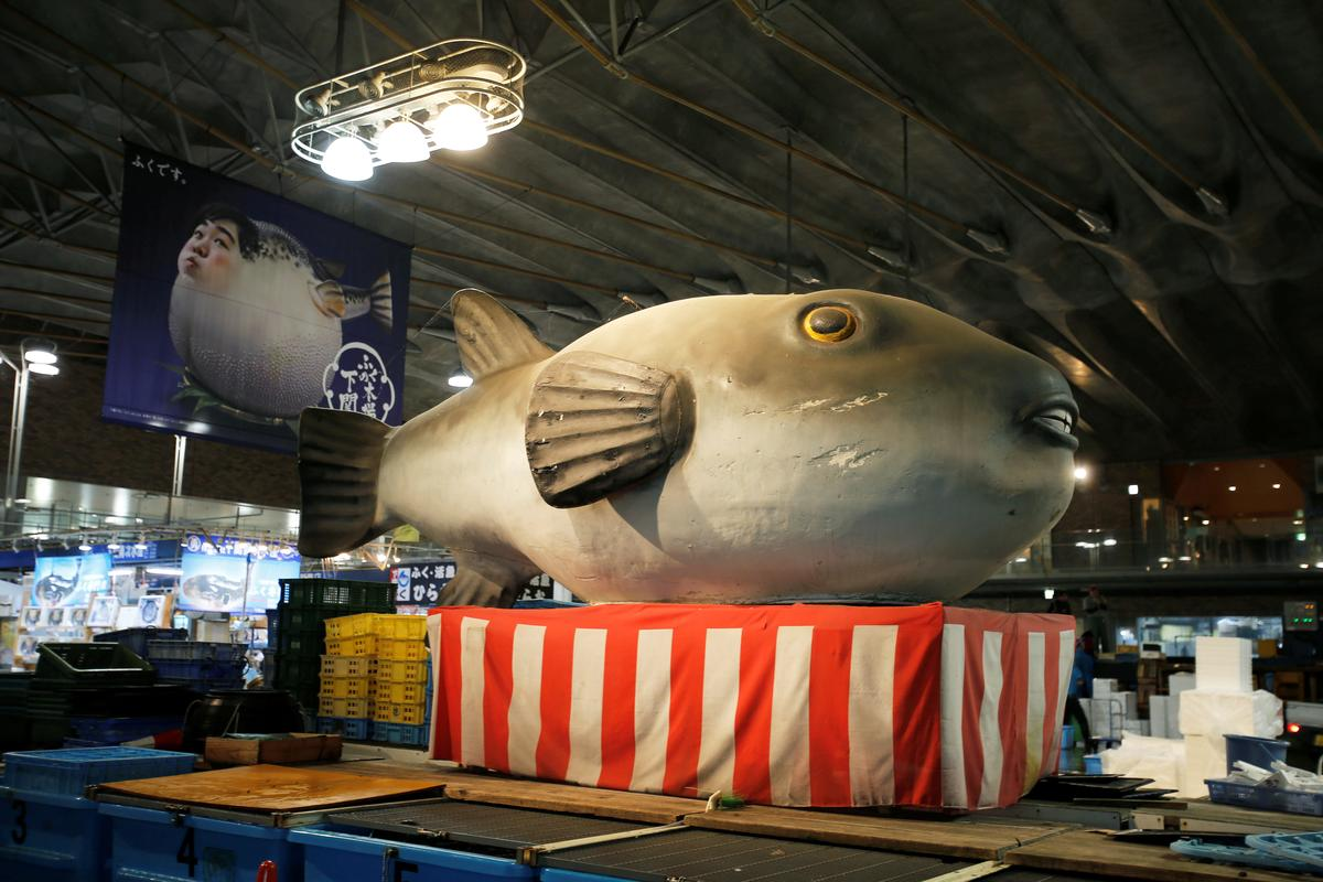 Climate change creates mutant fugu, a deadly Japanese delicacy