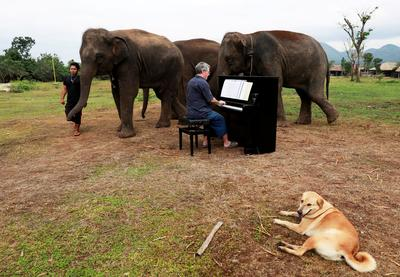 Music for elephants