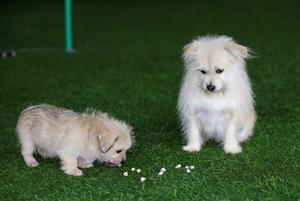 China's first pet cloning service