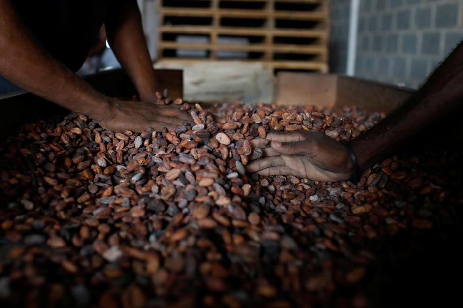Venezuela cocoa growers fear new pest: the government - Reuters
