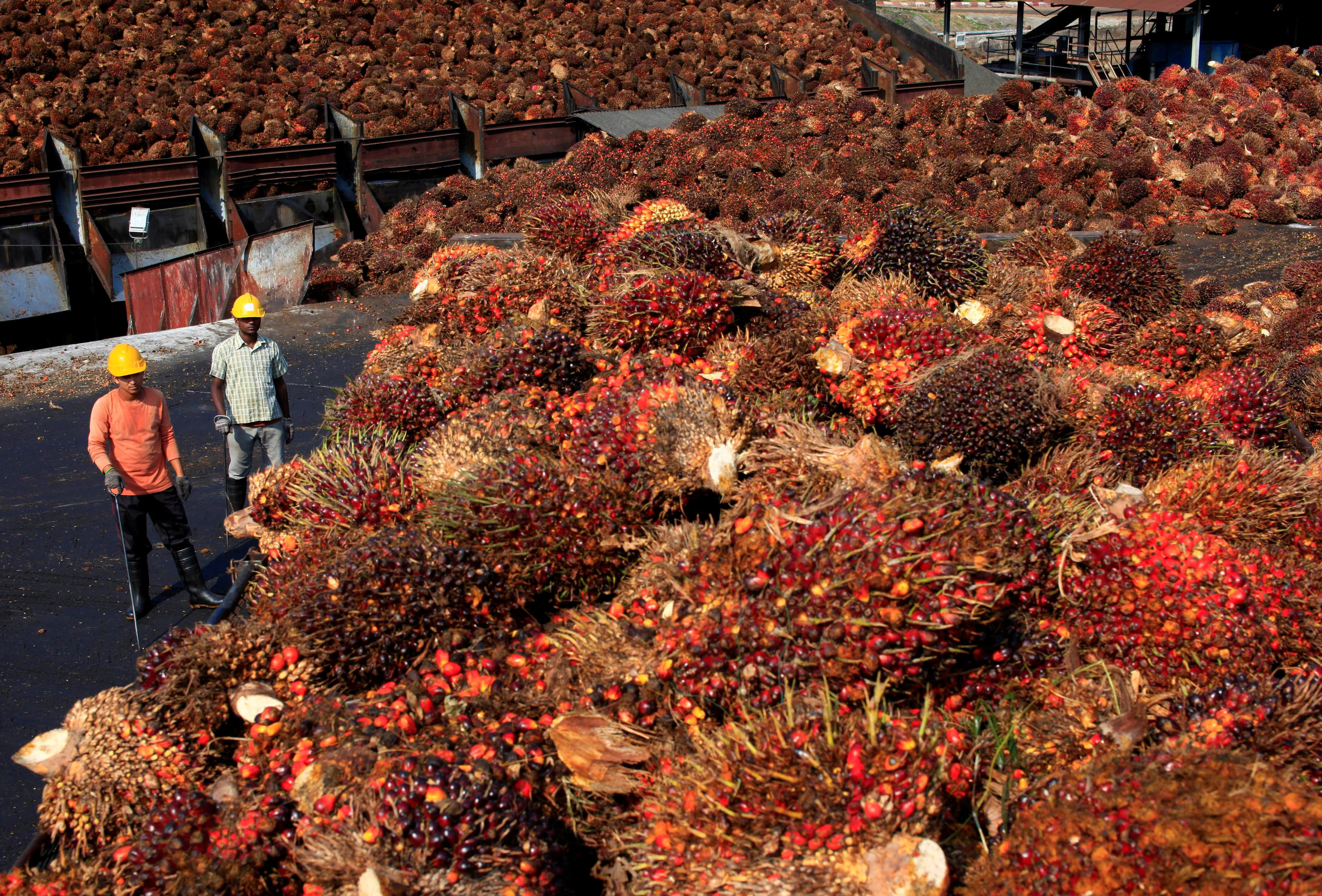 Malaysia could curb French purchases if palm oil use restricted