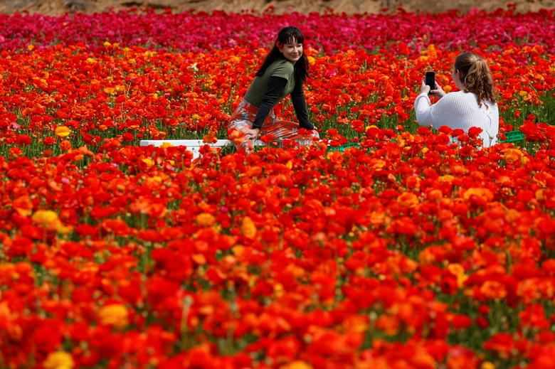 Flower fields of Carlsbad | Reuters com