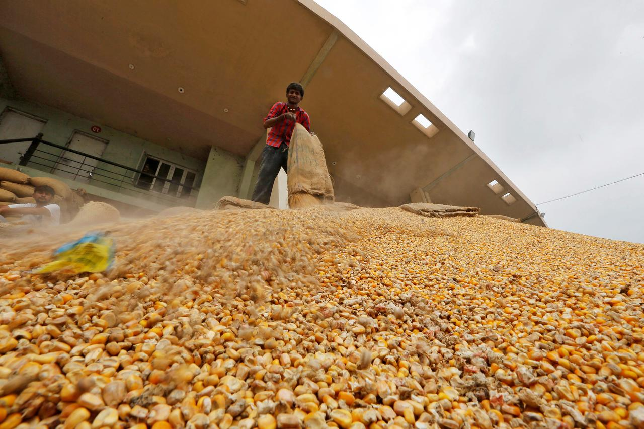 India imports 27,000 tonnes non-GM corn from Ukraine at $205