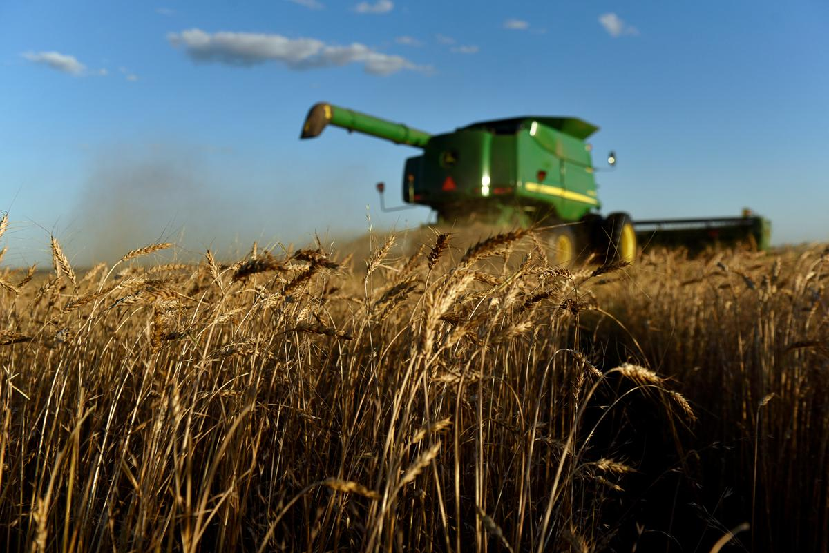 Column: Is the high already in for CBOT December corn futures?