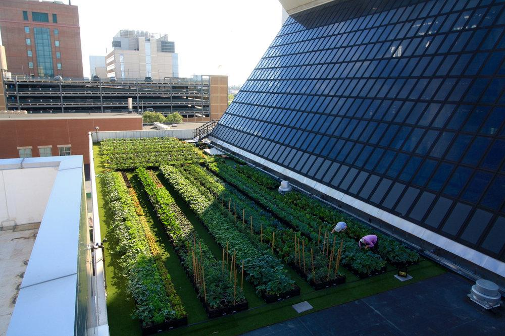 A Boston hospital with a farm on its roof seeks to inspire others