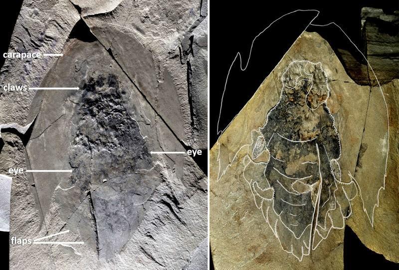 Honderde fossiele van vreemde oer roofdier is in Kanada opgegrawe