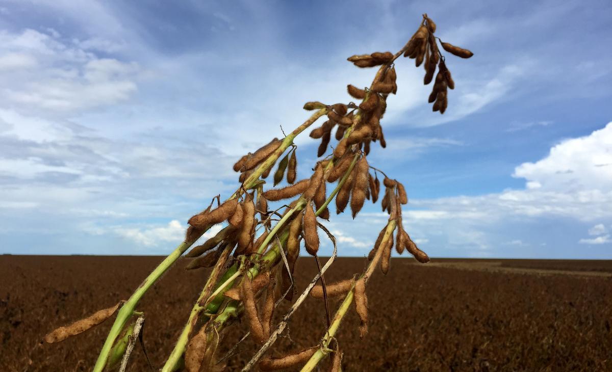 Visboer Mowi kan die invoer van soja in Brasilië oor Amazon-brande stop