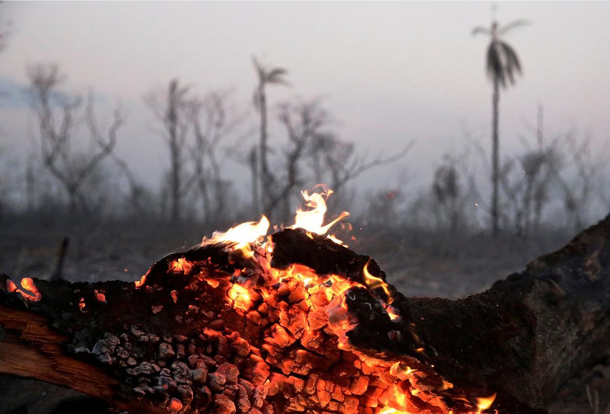 Terwyl die Boliviaanse woude brand, kom Evo se weddenskap op Big Farming aan die brand