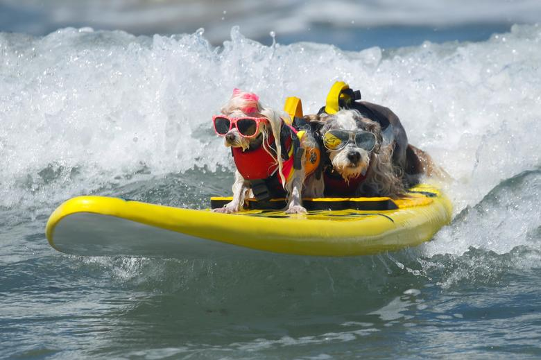 Prince Dudeman (R) and Flofy ride a wave together as they compete at the 14th annual Helen Woodward Animal Center Surf-A-Thon, where more than 70 dogs competed in five different weight classes for 'Top Surf Dog 2019' in Del Mar, California. REUTERS/Mike Blake