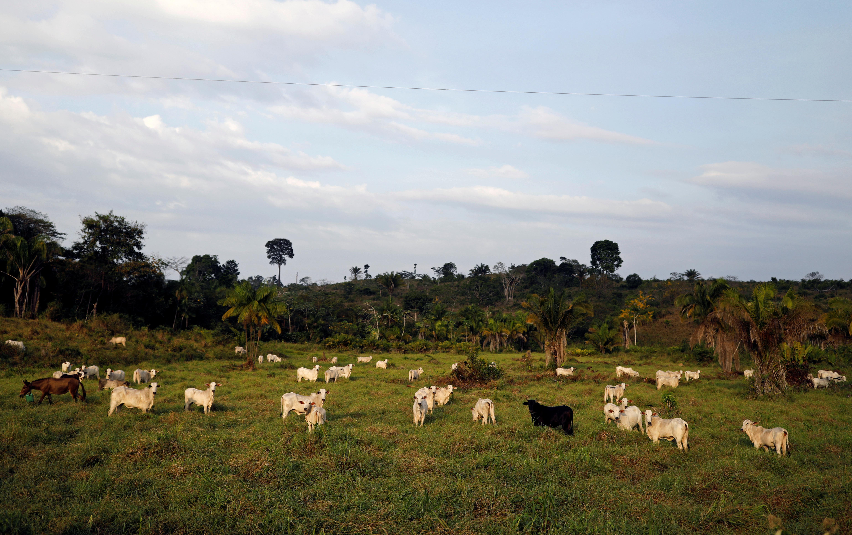 Des années après le meurtre d'une religieuse, des militants de l'église font face à des menaces en Amazonie sans foi ni loi