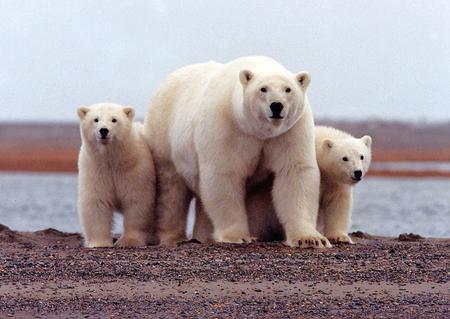 U.S. takes major step toward oil drilling in Alaska wildlife refuge