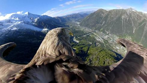 Eagle eye view of the Alps