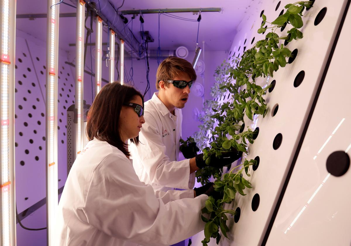 Czech lab grows mustard plants for Mars