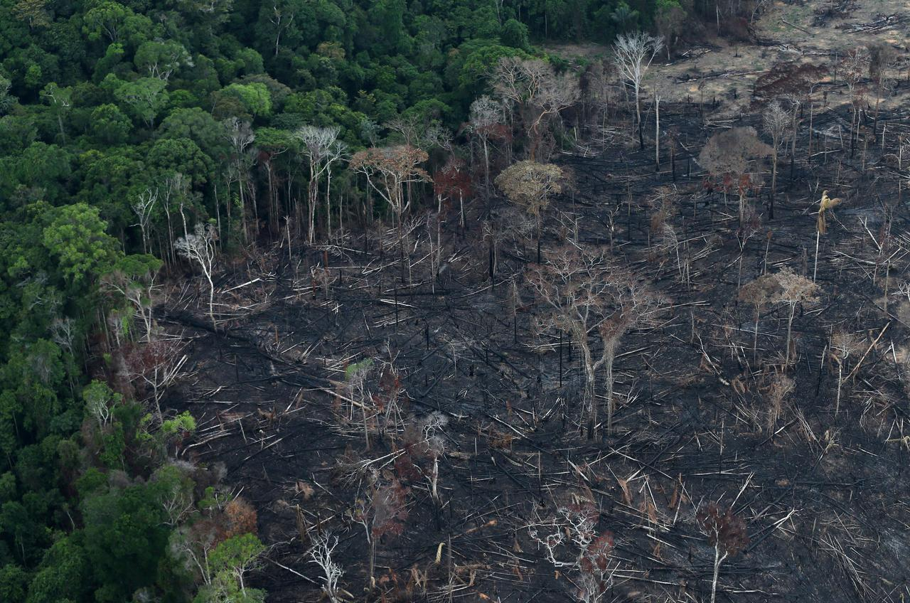 Brazil Amazon Deforestation Soars To 11 Year High Under Bolsonaro