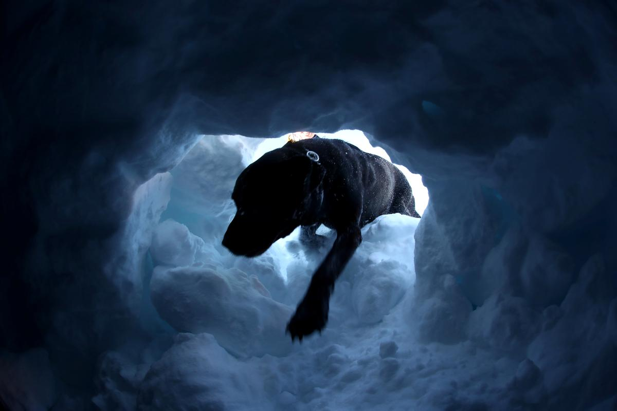 Switzerland's search dogs get ready for deadly avalanche season