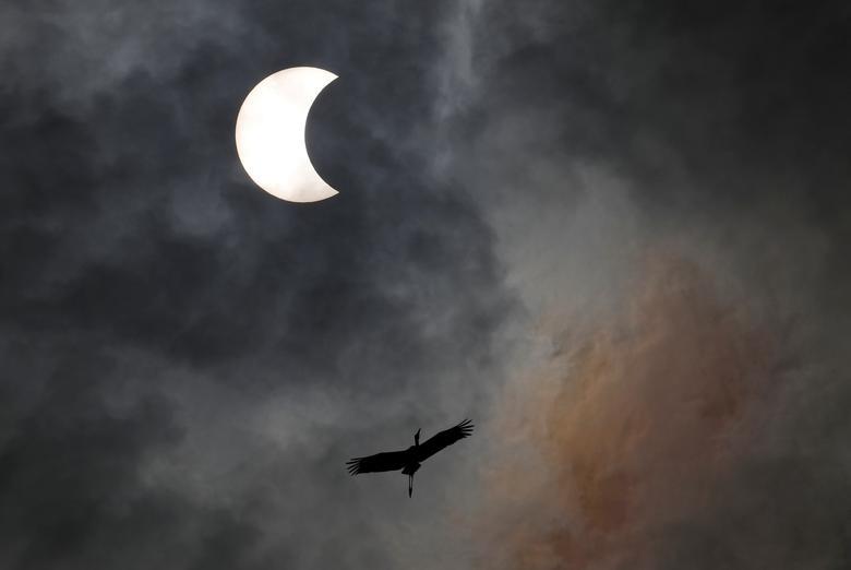 Un pájaro vuela durante el eclipse solar en Bangkok, Tailandia, 26 de diciembre de 2019. REUTERS / Soe Zeya Tun