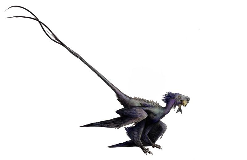 'Dancing dragon' shows feathers grew differently on dinosaurs and...