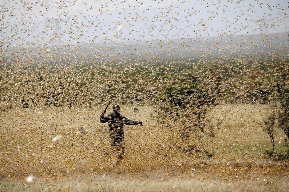 Pakistan Churches Struggle Amid Duel Plagues: Locusts, and Coronavirus