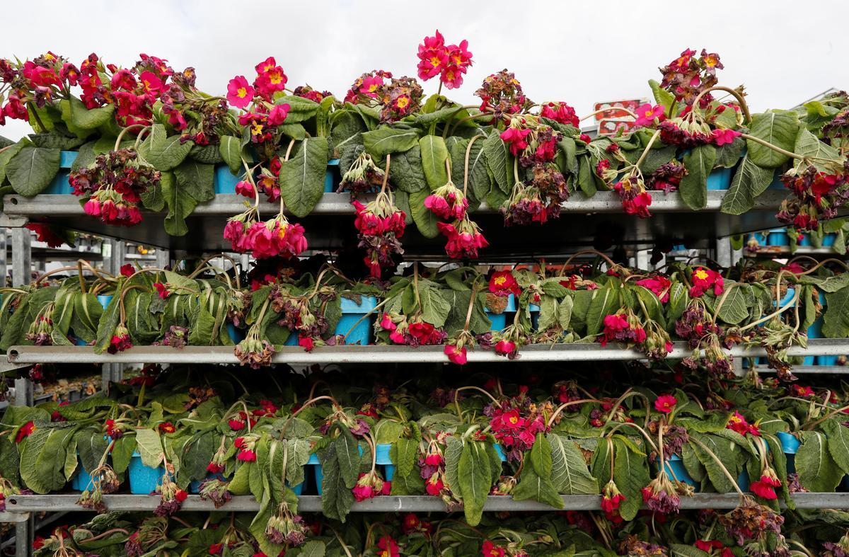 Bloomin' disaster: UK's garden industry faces ruin from coronavirus crisis