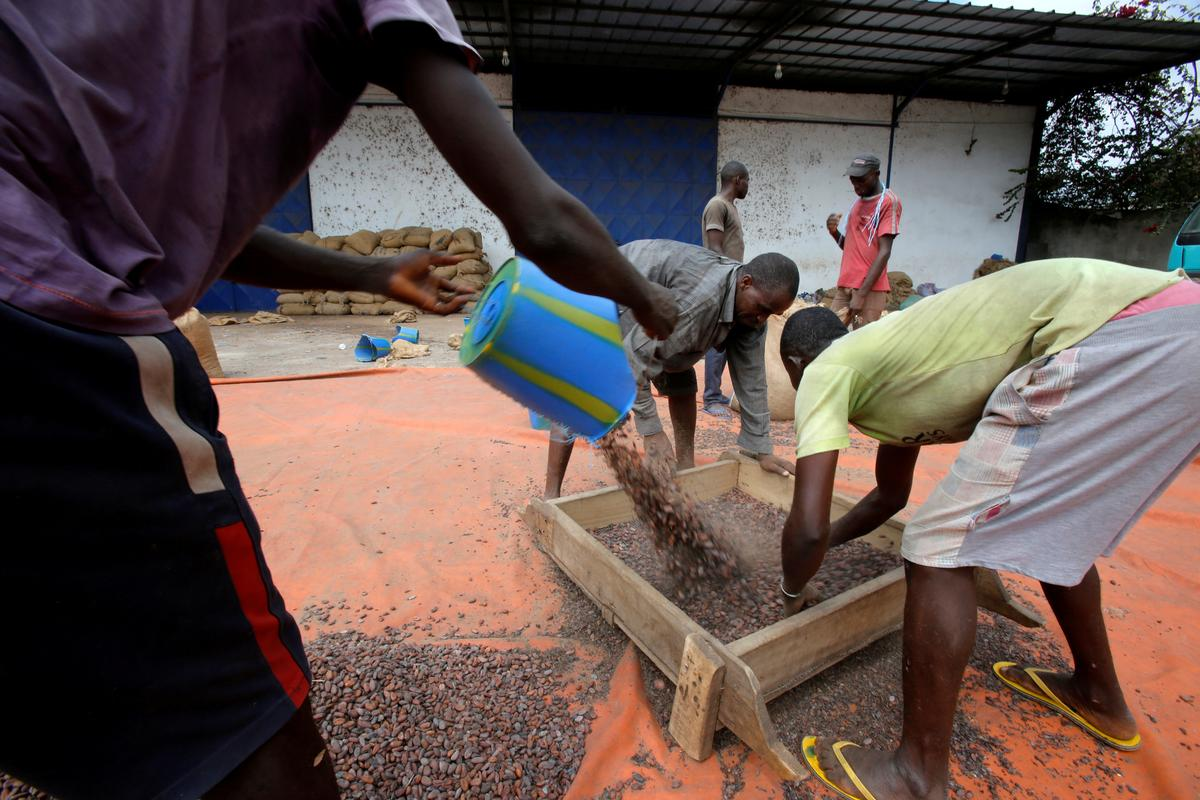 Child labour still prevalent in West Africa cocoa sector despite industry efforts: report