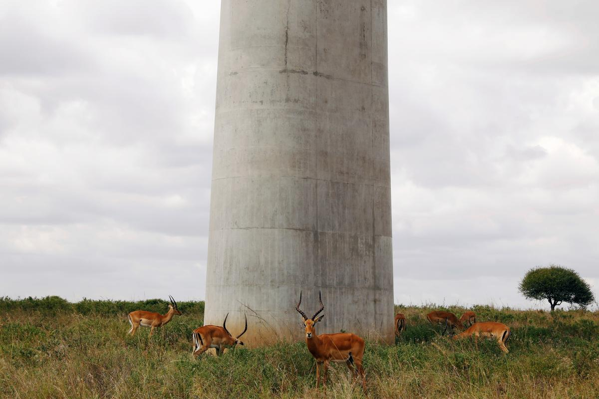 As city encroaches on Nairobi park, wild animals freedom to roam is under threat