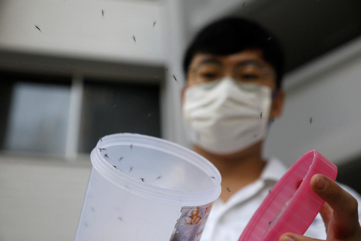 Singapore battles record dengue outbreak with more mosquitoes