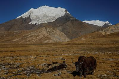 In Tibet, China preaches the material over the spiritual