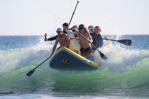 Surfing pet goat rides the waves at California beach